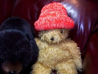 Hat_and_bears