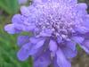 Pincushion20050626